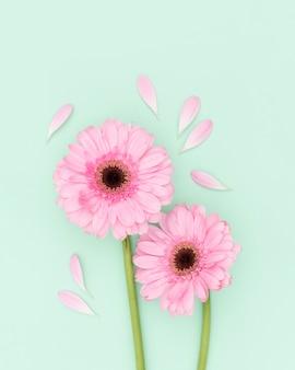 Vista superior decoração com flores cor de rosa