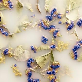 Vista superior delicada flores azuis escuras na água de cor branca