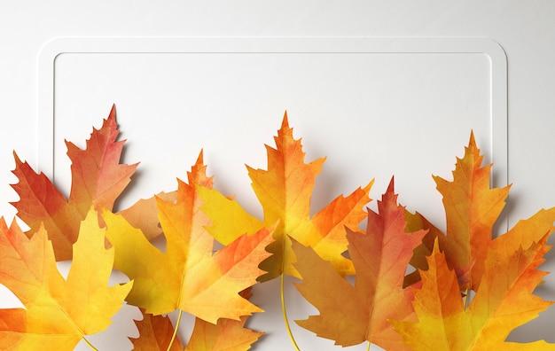Vista superior do arranjo das folhas de outono