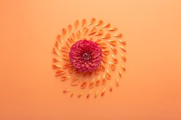 Vista superior do arranjo de pétalas de flores