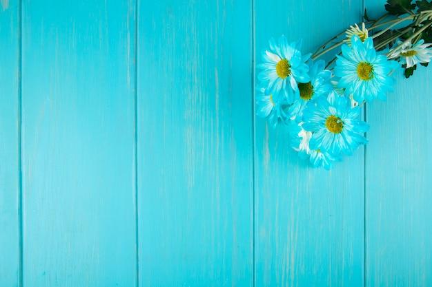 Vista superior do buquê de flores cor margarida gerbera azul sobre fundo azul de madeira, com espaço de cópia
