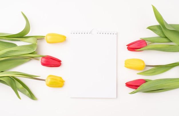Vista superior do calendário em branco com tulipas coloridas em fundo branco.