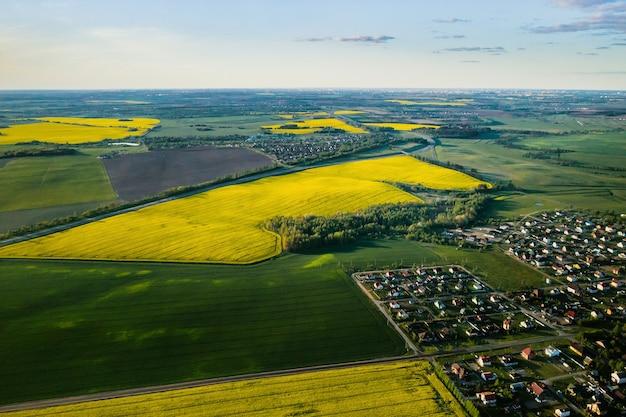 Vista superior do campo de colza amarela e da aldeia. um campo semeado de colza na bielorrússia. a aldeia é um campo de colza.