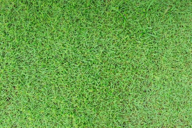Vista superior do campo de grama verde