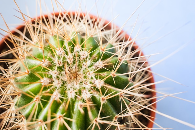 Vista superior do close-up de cacto verde com espinhos longos no vaso de flores redondo.