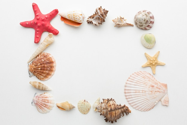 Vista superior do conceito de quadro de conchas