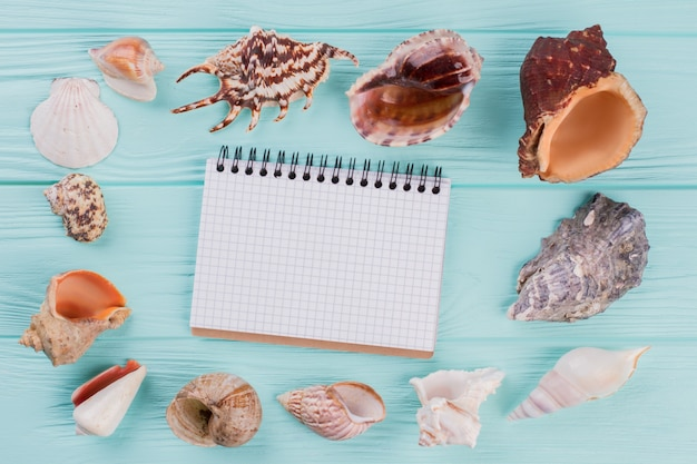 Vista superior do conjunto de diferentes conchas do mar e o bloco de notas no centro da composição em turquesa est ...