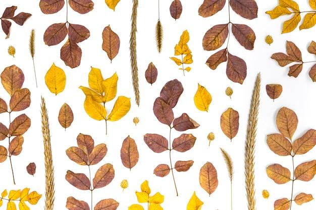 Vista superior do grupo de folhas