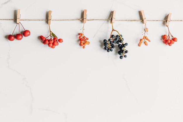 Vista superior do outono bagas-bérberis, uvas selvagens, macieira selvagem, rowan na corda com prendedores de roupa em fundo de mármore branco