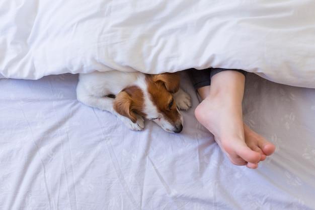 Vista superior do pé da mulher na cama atrás de uma tampa branca com seu cachorro pequeno bonito além. durante o dia, animais de estimação dentro de casa, estilo de vida.