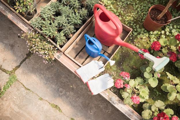 Vista superior do regador e luvas de mão perto de plantas em vasos de flor que crescem em estufa