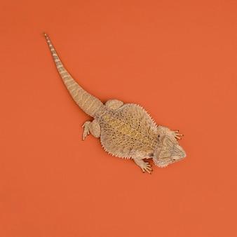 Vista superior do réptil iguana