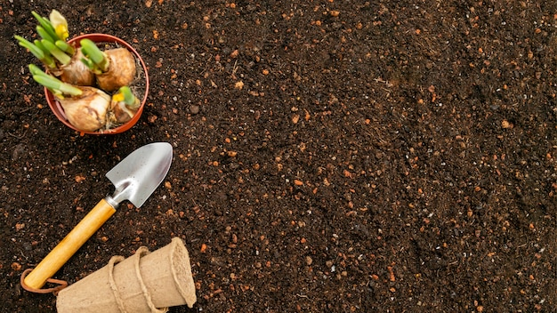 Vista superior do solo e ferramentas de jardinagem Foto gratuita