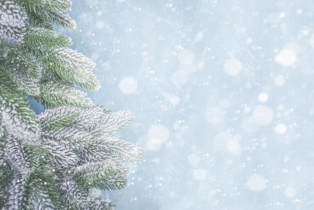 Vista superior dos galhos da árvore de natal com neve