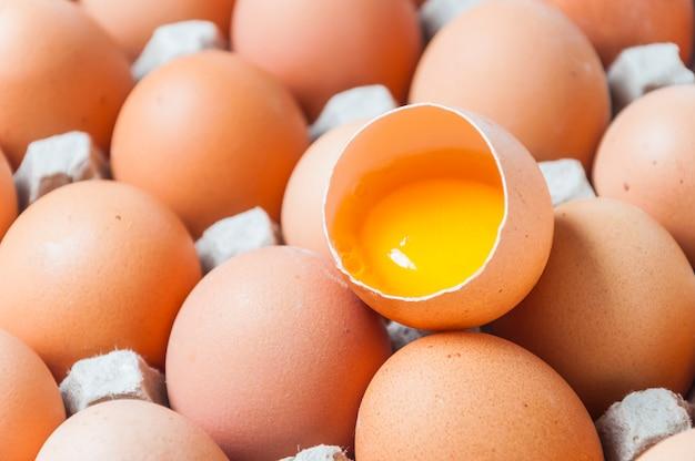 Vista superior dos ovos