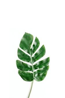 Vista superior em folha de palmeira tropical isolada