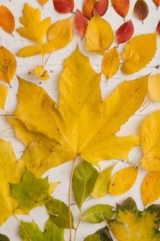 Vista superior em várias folhas coloridas de outono em fundo branco de madeira.