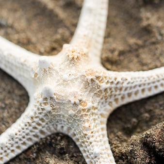 Vista superior estrela do mar seca na areia