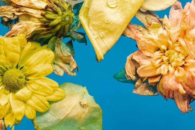 Vista superior flores amarelas em close-up de água
