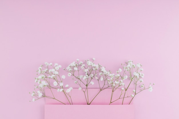 Vista superior flores brancas