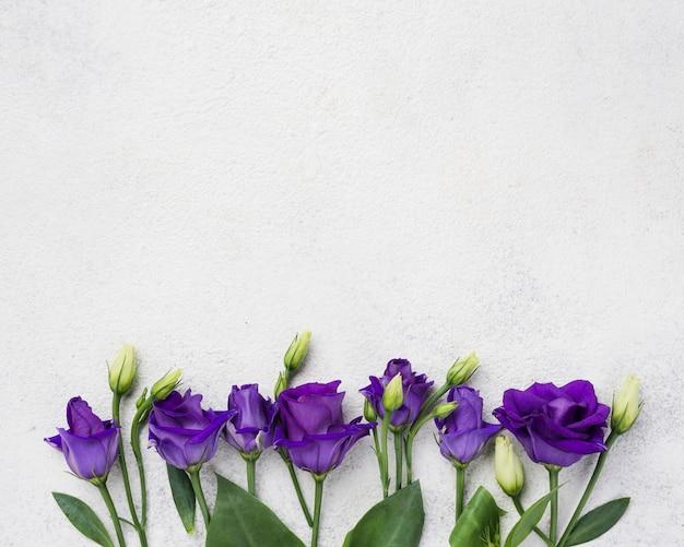 Vista superior flores com cópia-espaço