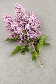 Vista superior flores lindo roxo isolado no cinza