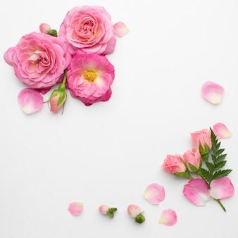 Vista superior flores rosas