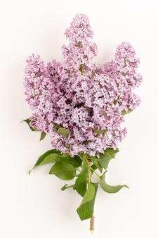 Vista superior flores roxo bonito isolado no chão branco