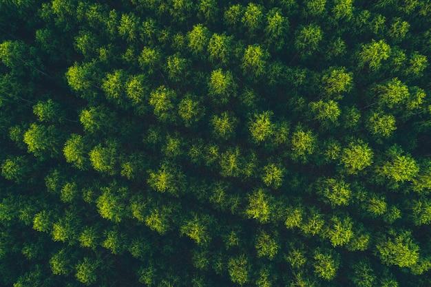 Vista superior floresta de eucalipto