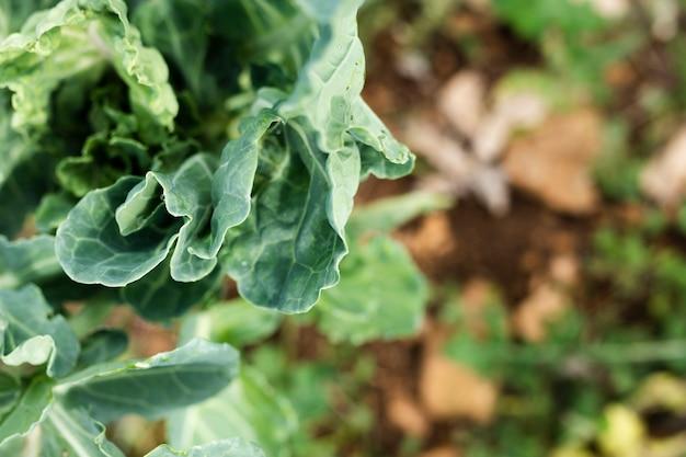 Vista superior folhas de saborosa salada de jardim