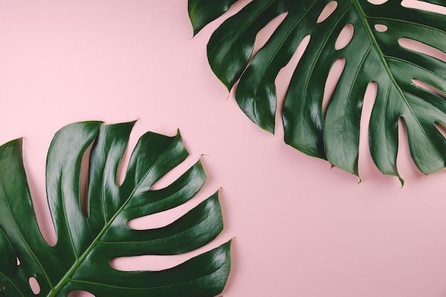 Vista superior folhas exóticas