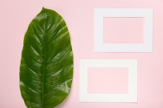 Vista superior, folhas verdes, ao lado de forma de papel retangular