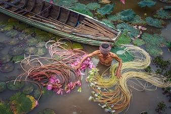 Vista superior, homem velho, vietnamita, apanhar, a, bonito, cor-de-rosa, loto, em, a, lago