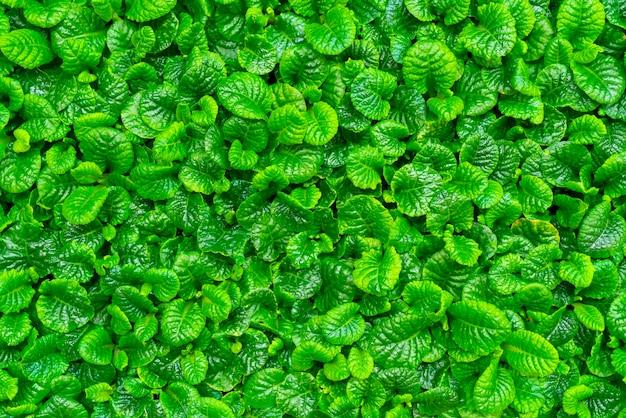 Vista superior linda folha verde