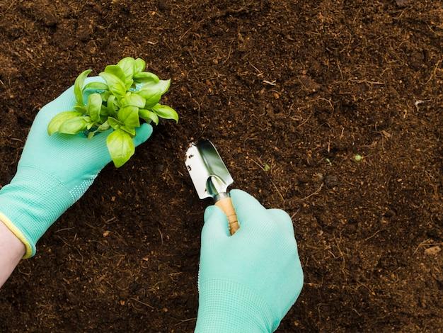 Vista superior mãos manipulando planta