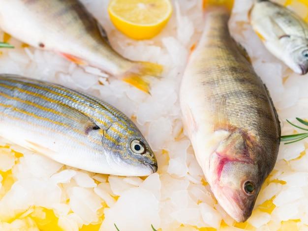 Vista superior mistura de peixe fresco com limão e ervas