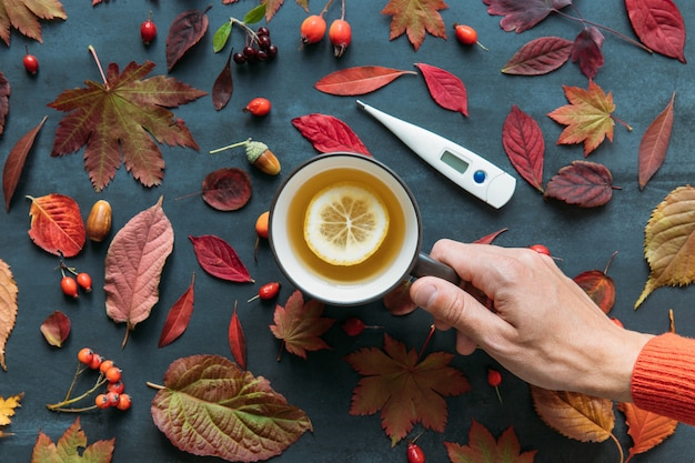 Vista superior na mão do homem segurando uma xícara de chá quente com limão, folhas de outono coloridas, rosa mosqueta madura, bagas de espinheiro e rowan, termômetro digital