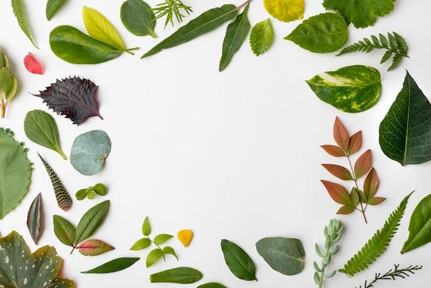 Vista superior natureza folhas com espaço de cópia