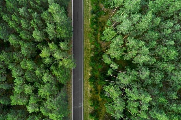 Vista superior no topo de altos pinheiros e estrada no meio