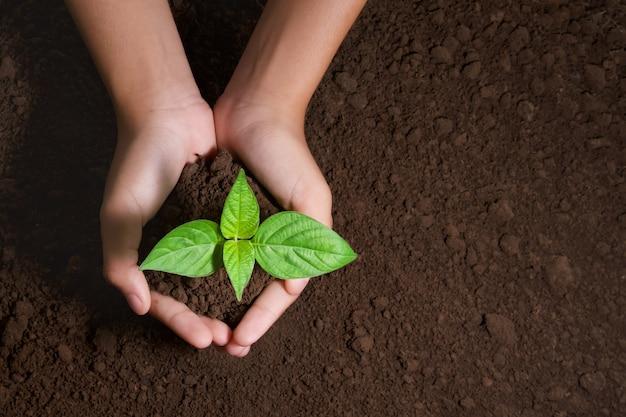 Vista superior, passe segurar, árvore jovem, para, plantar, em, jardim