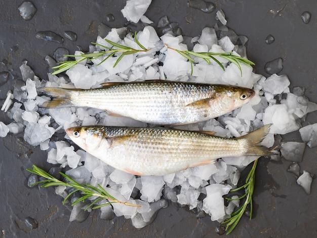 Vista superior peixes deitado em cubos de gelo