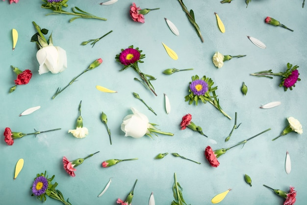 Vista superior pétalas e flores frescas em fundo azul