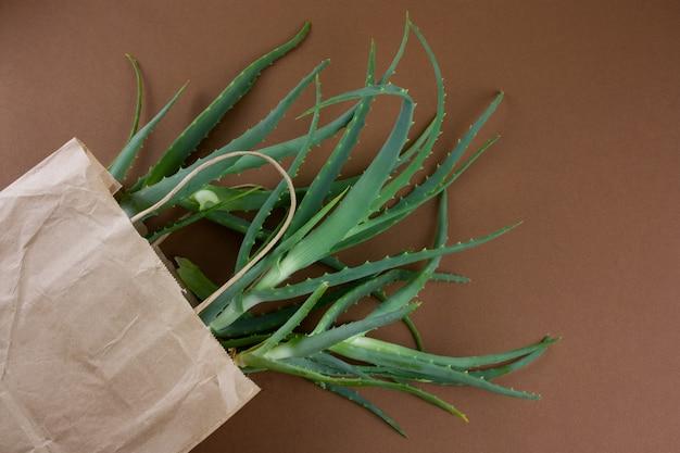 Vista superior plana colocar eco saco de compras de papel com aloe planta, ecologia e conceito vegetarianismo