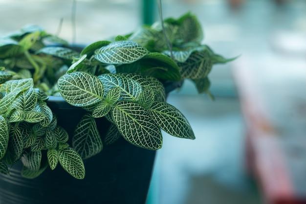 Vista superior planta na decoração do pote em uma loja.