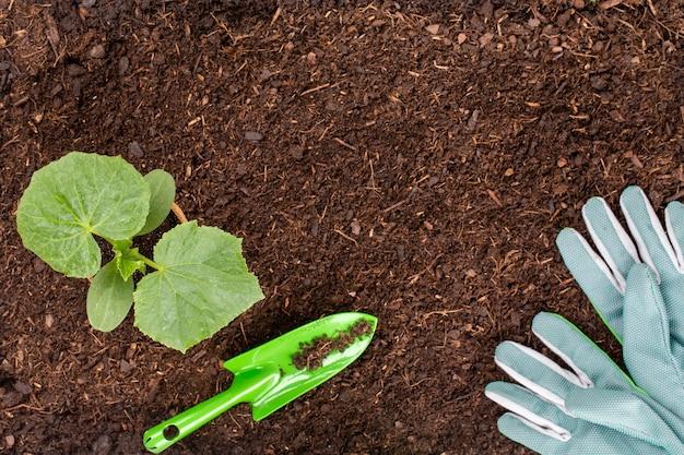 Vista superior plantando mudas jovens de salada de alface