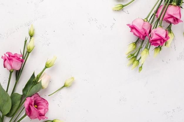 Vista superior primavera rosas