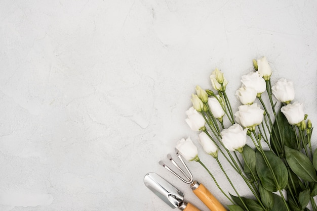 Vista superior rosas brancas e ferramentas de jardinagem