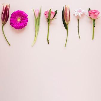 Vista superior várias flores gradientes rosa e cópia espaço