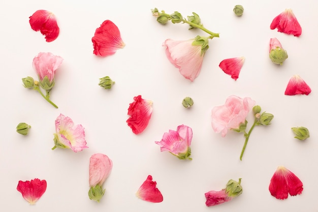 Vista superior variedade de pétalas de flores