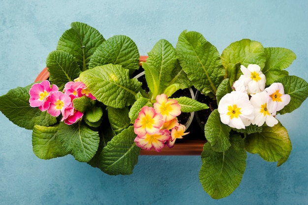 Vista superior vasos de flores